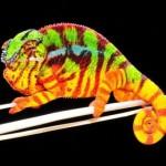 camaleon pantera